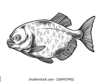 Piranha fish animal sketch engraving raster illustration. Scratch board style imitation. Black and white hand drawn image.