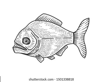 Piranha fish animal sketch engraving raster illustration. Tee shirt apparel print design. Scratch board style imitation. Black and white hand drawn image.