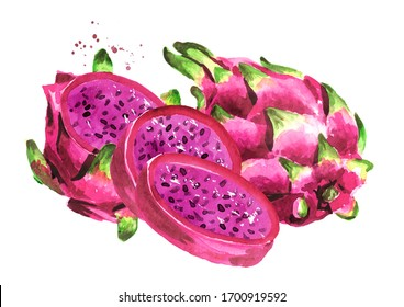 Pitaya. Red or purple Dragon fruit. Hand drawn watercolor illustration isolated on white background