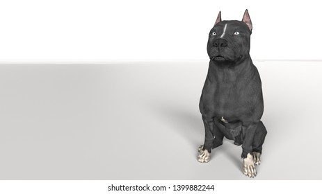 Pitbull dog  looking away while sitting on white floor 3d rendering