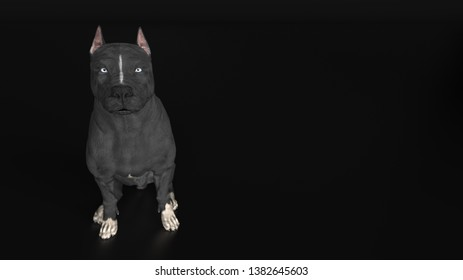Pitbull dog sitting high angle camera black background 3d rendering