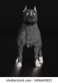 Pitbull shocked and surprised standing on black floor 3d rendering