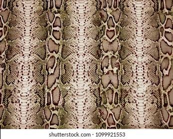 piton pattern, snake skin, animal skin