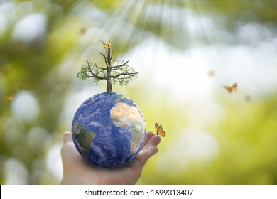 Planet Earth globe ball and growing tree in human hand, flying yellow butterfly on green sunny background. Saving environment, save clean planet, ecology concept. 3D Illustration.