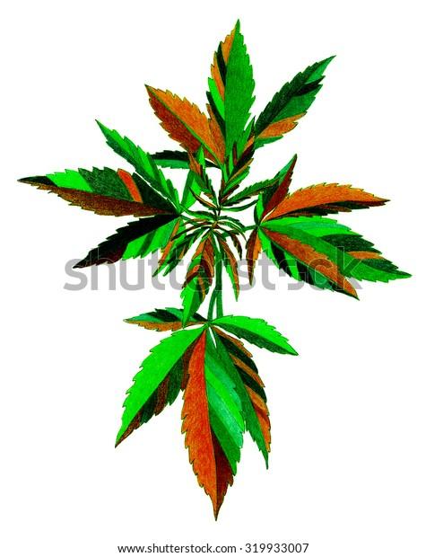 Plant - cannabis - crayon drawing