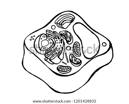 Plant Cell All Parts Sight Stock Illustration