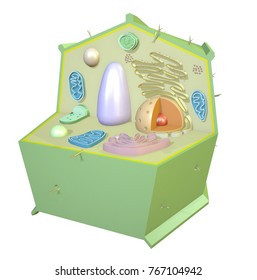 Plant Cell Biology Macro 3D Render.
