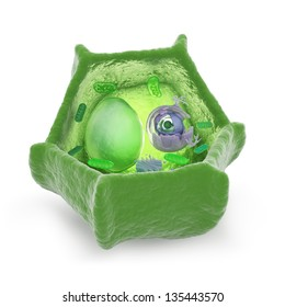 Plant cell cutaway science illustration