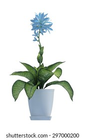 plant iSolated Collection - Shutterstock ID 297000200