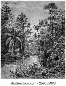Plant landscape of the Cretaceous period, Bohemia, vintage engraved illustration. Earth before man 1886.