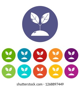 Plant sprout icons color set for any web design on white background