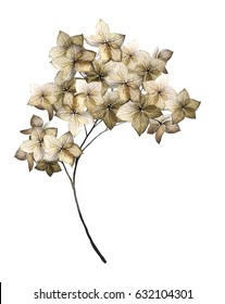 plants elements - hydrangea.  branches with flower, illustration isolated on white background. watercolor style.