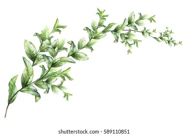 plants elements.  wild herb,  branches with leaves, illustration isolated on white background, exotic. watercolor style.