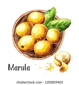 Plate of marula fruits, top view. Watercolor hand drawn illustration, isolated on white background