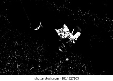 Playful Kitten Black Background. Poster Style Illustration with Copy Space. Black White.