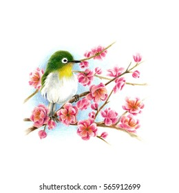 Plum blossoms and little bird.