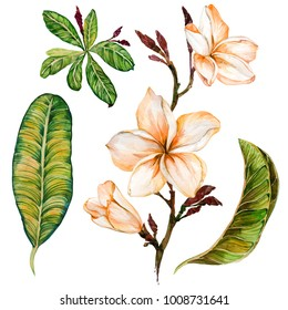 Plumeria flower on a twig. Tropical floral set (flowers and leaves). Isolated on white background.  Watercolor painting. Hand drawn.