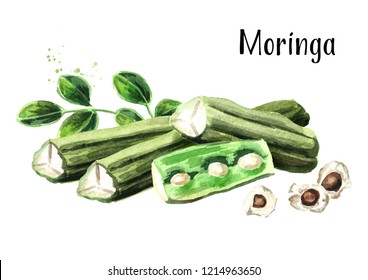 Pods and seeds of Moringa. Watercolor hand drawn illustration, isolated on white background