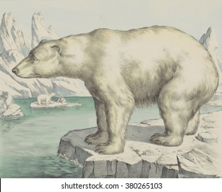 Polar Bear, by Jos. Scholz, c. 1830-80, Dutch print, lithograph. Arctic landscape with polar bears.