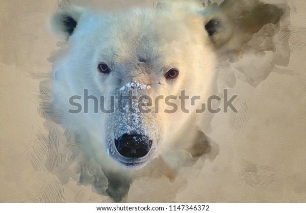 Polar bear closeup head shot,digital art