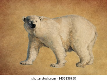 POLAR BEAR COLOUR PENCIL DRAWING ON BROWN BACKGROUND