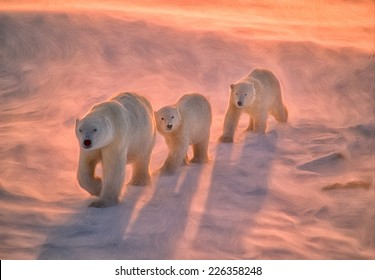 Polar bears on tundra in Arctic sunset