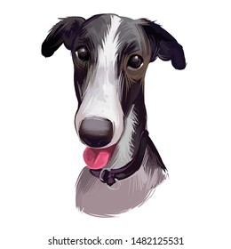 Polish Greyhound dog portrait isolated on white. Digital art illustration of hand drawn dog for web, t-shirt print and puppy food cover design. Chart polski, Polish sighthound breed, puppy with tongue