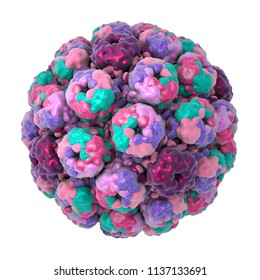 Polyomavirus, DNA virus, Papovaviridae family, 3D illustration. Many of them are asymptomatic but some cause cancer, such as Merkel cell polyomavirus, leukoencephalopathy, haemorrhagic cystitis