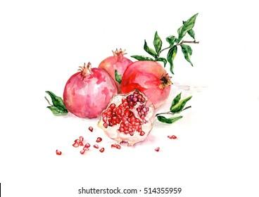 pomegranate fruit watercolor illustration