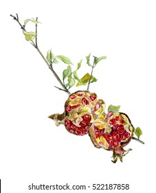 Pomegranate isolated on a white background. Watercolor sketch. A branch of pomegranate with the broken fruit