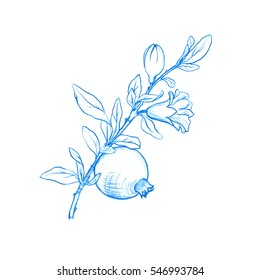 pomegranate tree branch with fruit, leaves, buds and flower drawing by blue pencil,isolated hand drawn elements