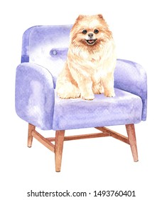 Pomeranian dog. Portrait of a dog. Watercolor hand drawn illustration. Watercolor Pomeranian sitting on sofa chair layer path, clipping path isolated on white background.