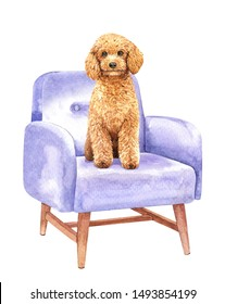 Poodle of a dog. Watercolor hand drawn illustration. Watercolor Poodle dog sitting on sofa chair layer path, clipping path isolated on white background.