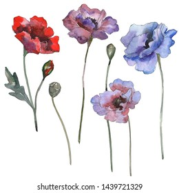 Poppy floral botanical flowers. Wild spring leaf wildflower isolated. Watercolor background illustration set. Watercolour drawing fashion aquarelle isolated. Isolated poppies illustration element.