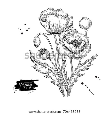 Royalty Free Stock Illustration Of Poppy Flower Drawing Set Isolated