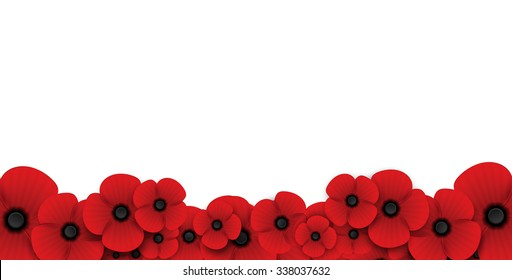 poppy flower Remembrance Day white background