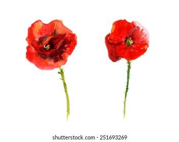 Poppy flower. Watercolour