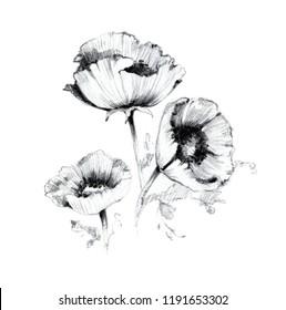 Black White Poppy Images Stock Photos Vectors Shutterstock