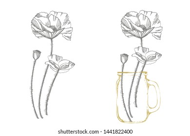 Poppy flowers. Botanical plant illustration. Vintage medicinal herbs sketch set of ink hand drawn medical herbs and plants sketch.