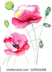 Poppy flowers illustration isolated on white background, tender watercolor painting for crafters, greeting cards, prints, posters, wedding invitations and wedding decor, summer flower maquies