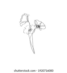 Poppy Flowers Line Art Drawing. Flowers Black Sketch Isolated on White Background. Poppies One Line Illustration. Minimalist Botanical Drawing. Raster copy