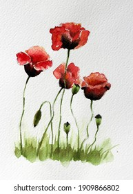 poppy flowers for remembrance's day for our love one.