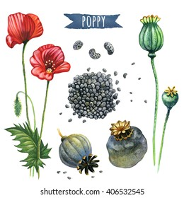 Poppy, hand-painted watercolor set, vector clipping paths included