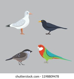 Popular birding species collection isolated illustration