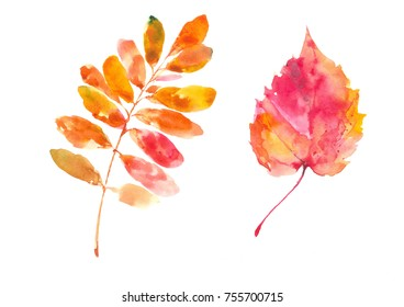 Populus tremula autumn leaf. Caragana arborescence leaf. Autumn. Watercolor background.