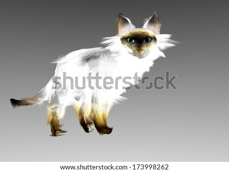 Royalty Free Stock Illustration Of Portrait Angora Siamese Cat White