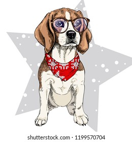 portrait of beagle dog wearing winter bandana and glasses. Isolated on star and snow. Skecthed color illustraion. Christmas, Xmas, New year. Party decoration, promotion, greeting card