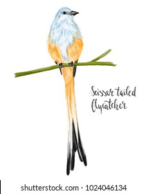 Portrait of a beautiful watercolor scissor -tailed flycatcher isolated on white ackground. Could be used for prints/ t-shirts/ books / postcards etc
