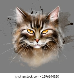 Portrait of a cat with an angry face, close-up. Beautiful and independent cat, with amber eyes, spray paint on grey background