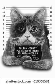 Portrait cat illustration, hand drawn artwork, animal